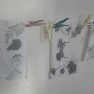 les plantes à tanins